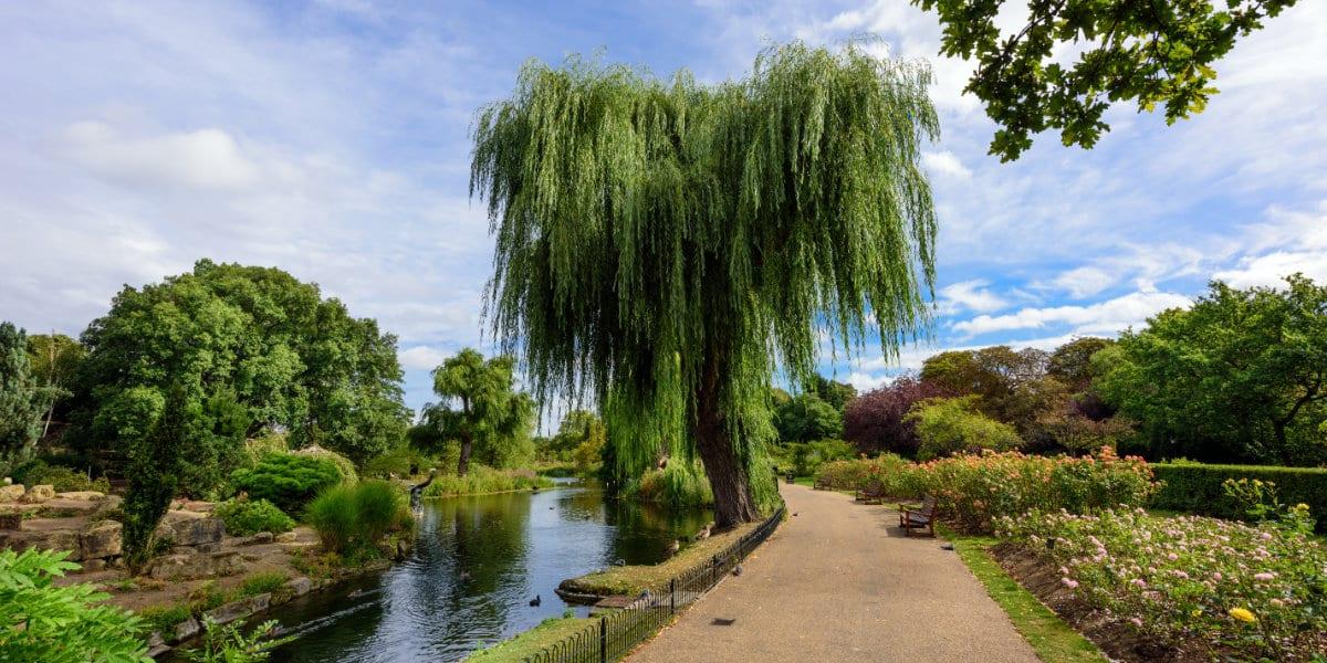 Queen Mary's Rose Gardens in Regent's Park, London, UK.