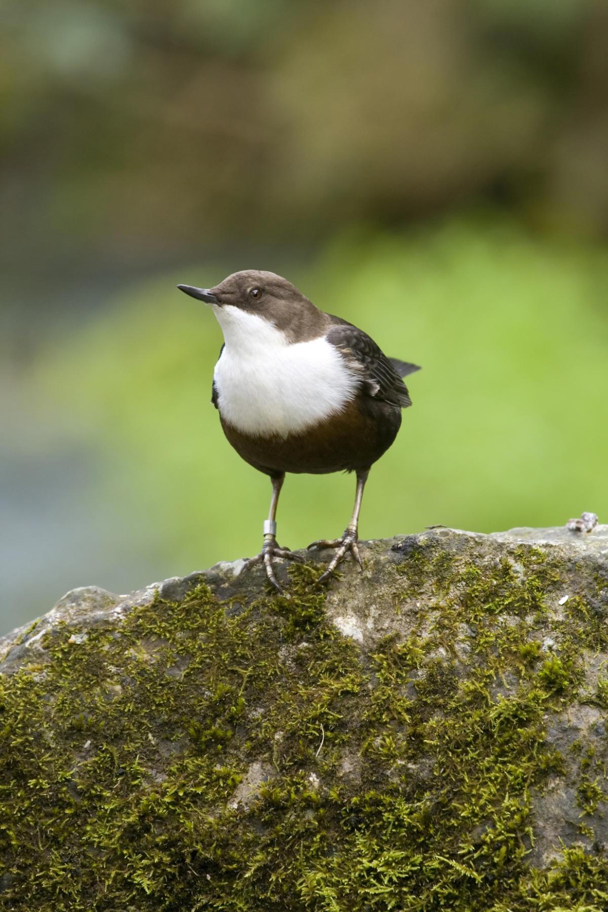 Derbyshire Wildlife