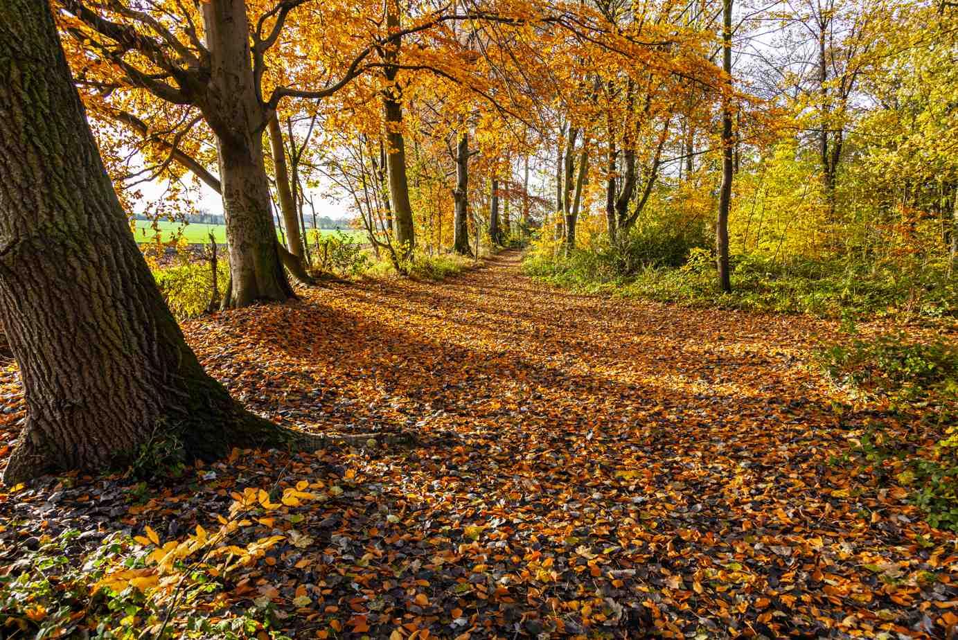 Autumn forest on a crisp sunny day