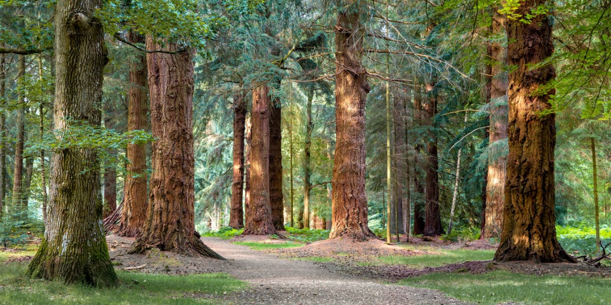 View of Long Trees walk in New Forest national park.
