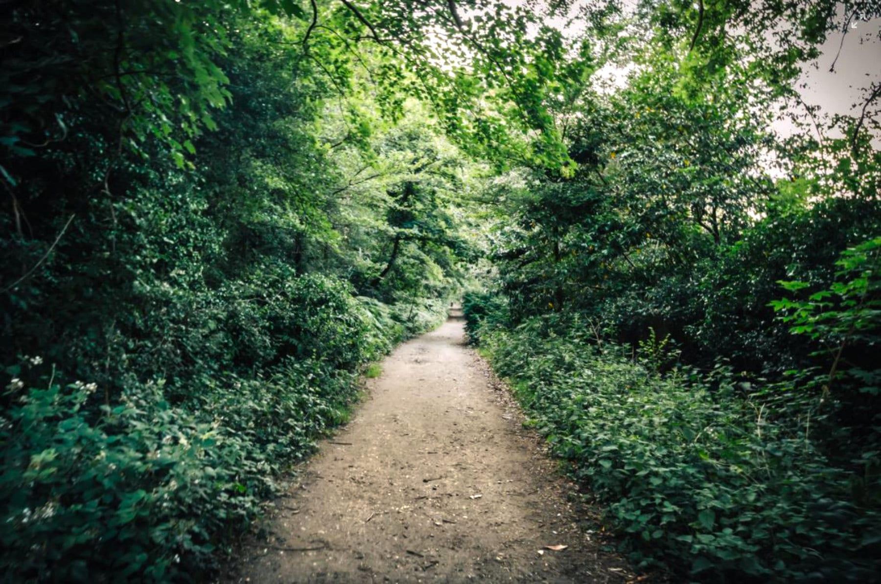 walking_path