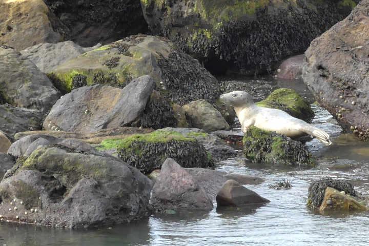 Seal_on_beach