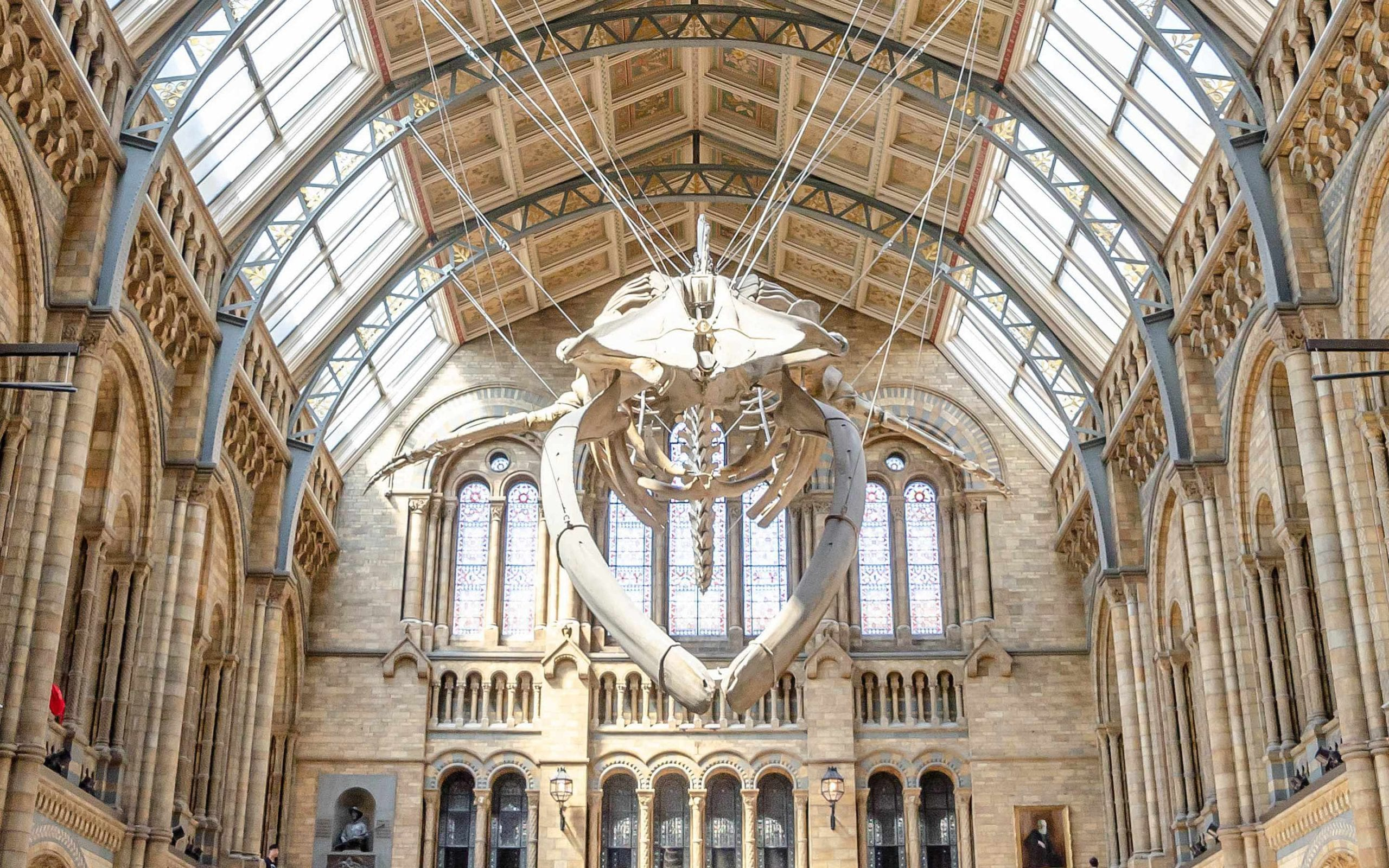 Grand hall featuring ornate brick walls and stained glass windows, with a whale skeleton suspended from the ceiling