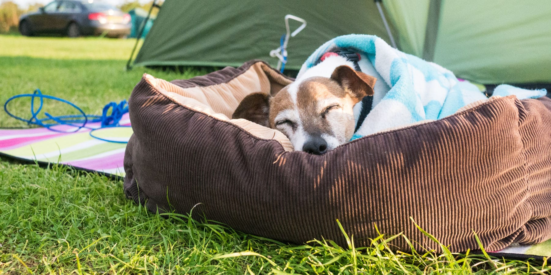 Small dog sleeping by tent
