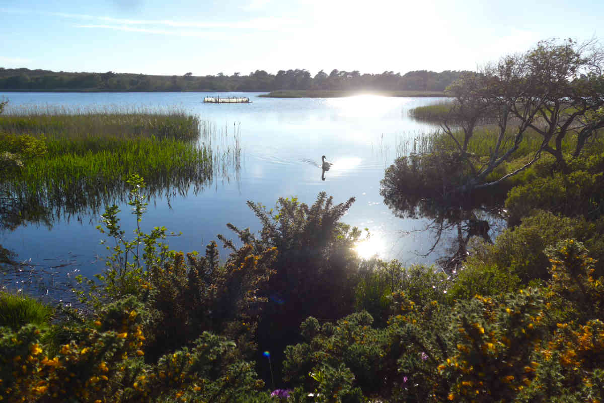 nature reserve with plants and swans