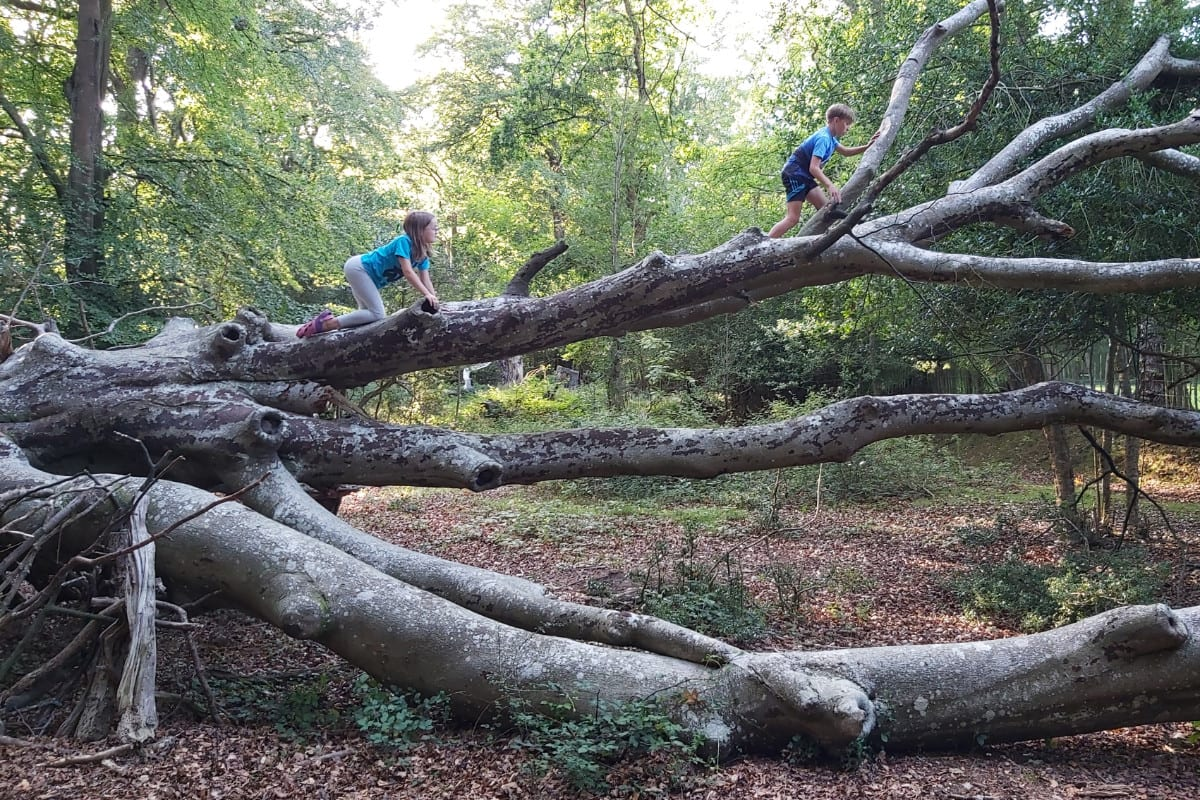 Children climbing a tree in the New Forest