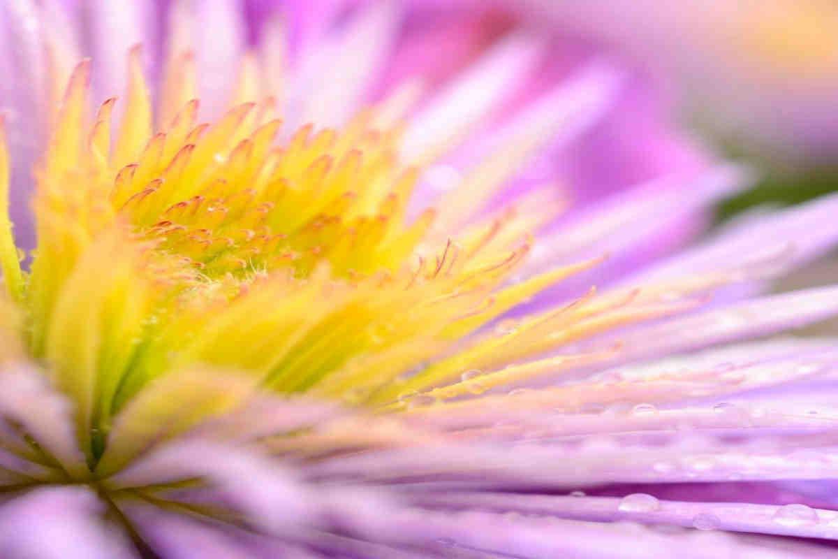 Pink summer flower