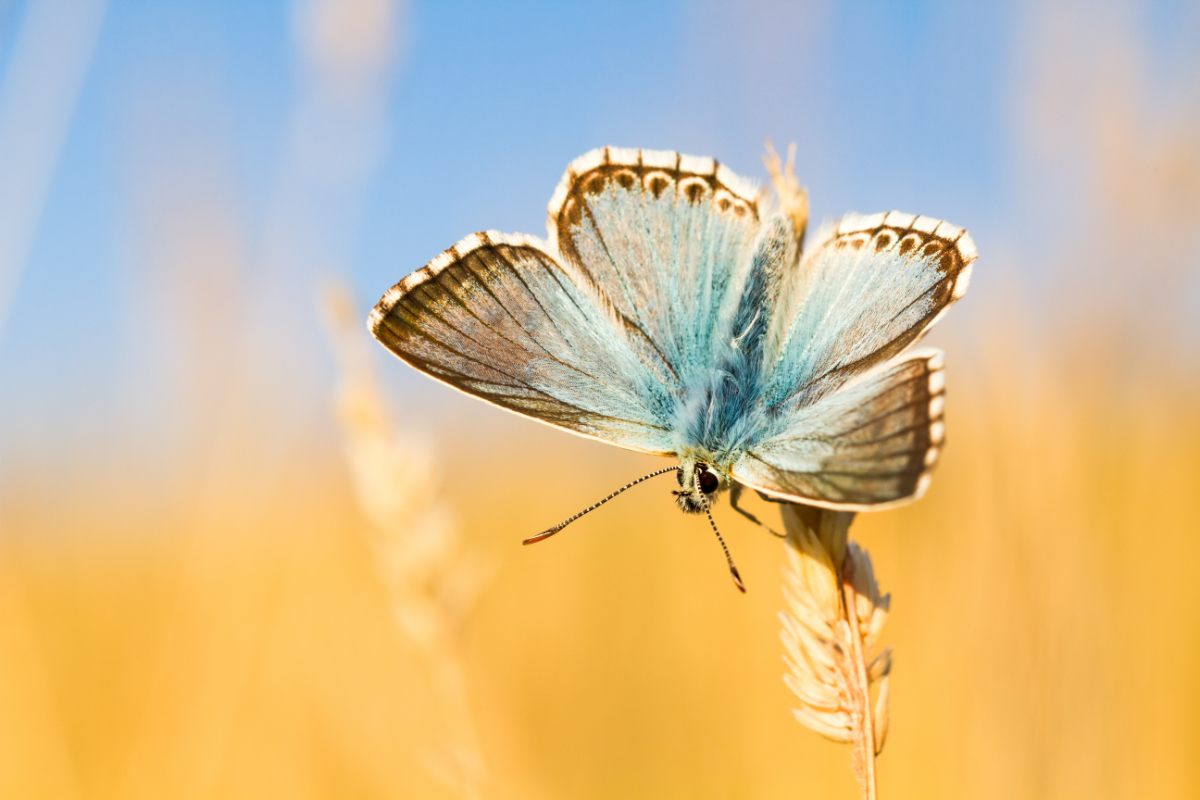 Blue butterfly outdoors