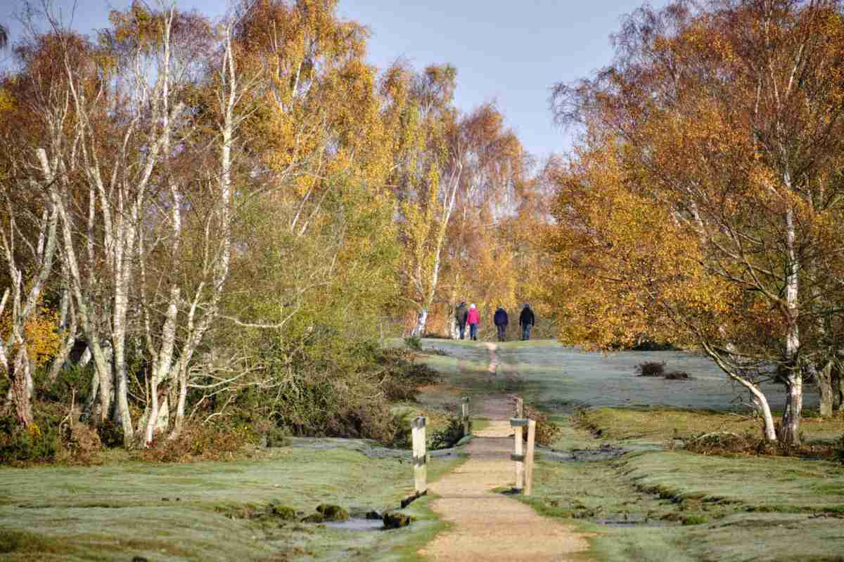 On a frosty autumn morning, Group of four going for a walk on this lovely morning sun, in the New Forest